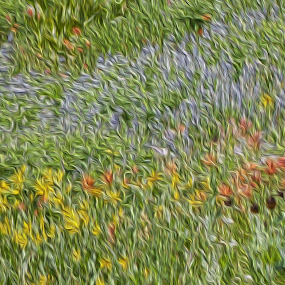 Albion Wildflower Impressionism by Carrie Plastow - Abstract Fine Art