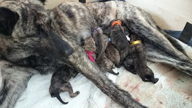 Photo: Net geboren, amper opgedroogd en direct allemaal drinken bij mama