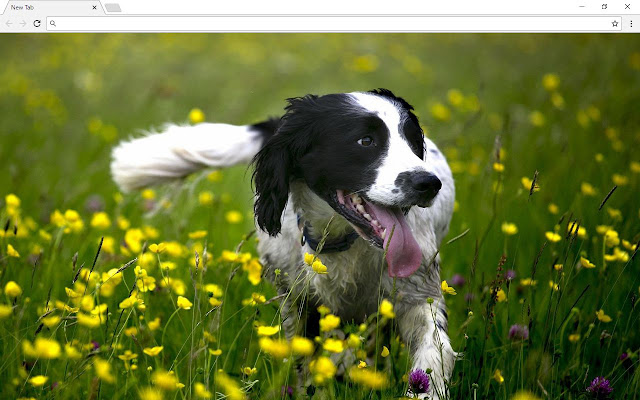 Dogs & Puppies New Tab Page