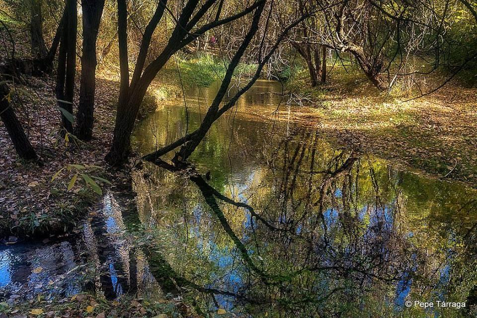 La imagen puede contener: árbol, planta, exterior, naturaleza y agua