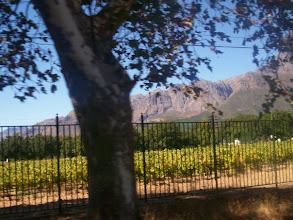 Photo: A vineyard in Stellenbosch