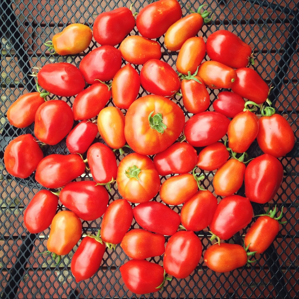 Everyone's favorite fruit. Or vegetable. Who cares, they make good salsa!