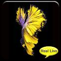 Betta Fish 6S Video Wallpaper icon