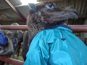 Photo: Ze zijn erg aanhankelijk en zoeken een schouder om op te leunen.