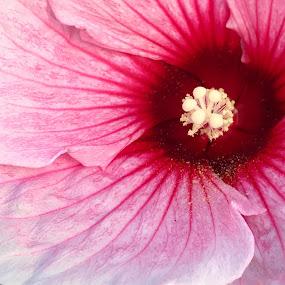 by Sean Michael - Flowers Single Flower