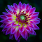 IMG_0924-15pix.jpg