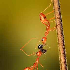 Ur's by Faiq Alfaizi - Animals Insects & Spiders