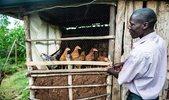 A man tends to his local chicken farm. GiveDirectly funds can help pay for supplies, equipment, and repairs on this farm.