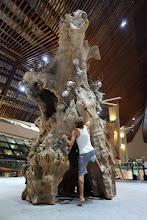 Photo: C'est un vrai trou d'arbre