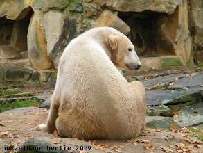 Photo: Knut wirft einen Blick ueber die Schulter ;-)