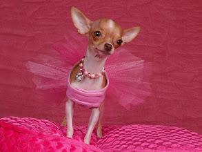 Photo: The Purse Pooch