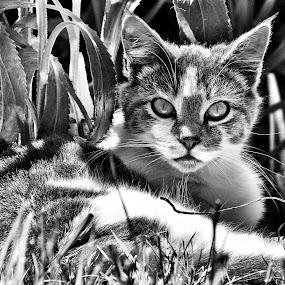 by Brenda Baird - Black & White Animals (  )