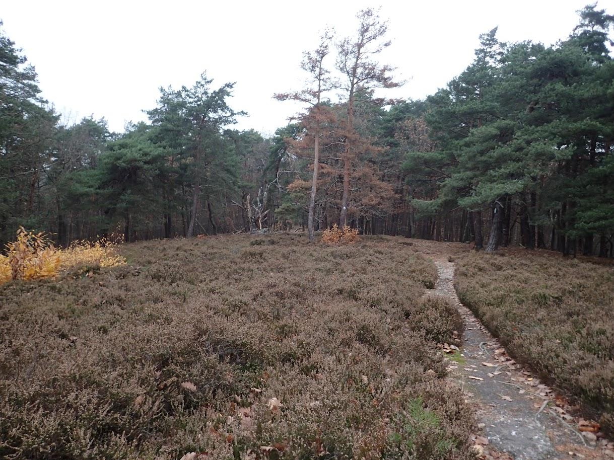 Heidebuckel (477m)