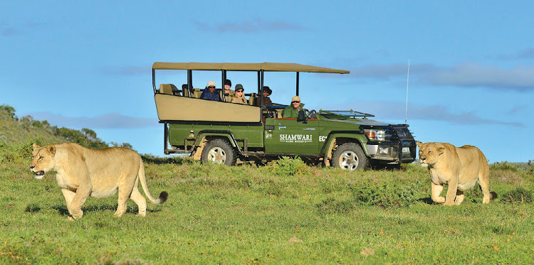 Shamwari Game Reserve offers the chance to spot lions