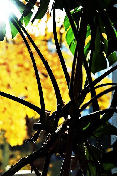 Photo: office window view - plant