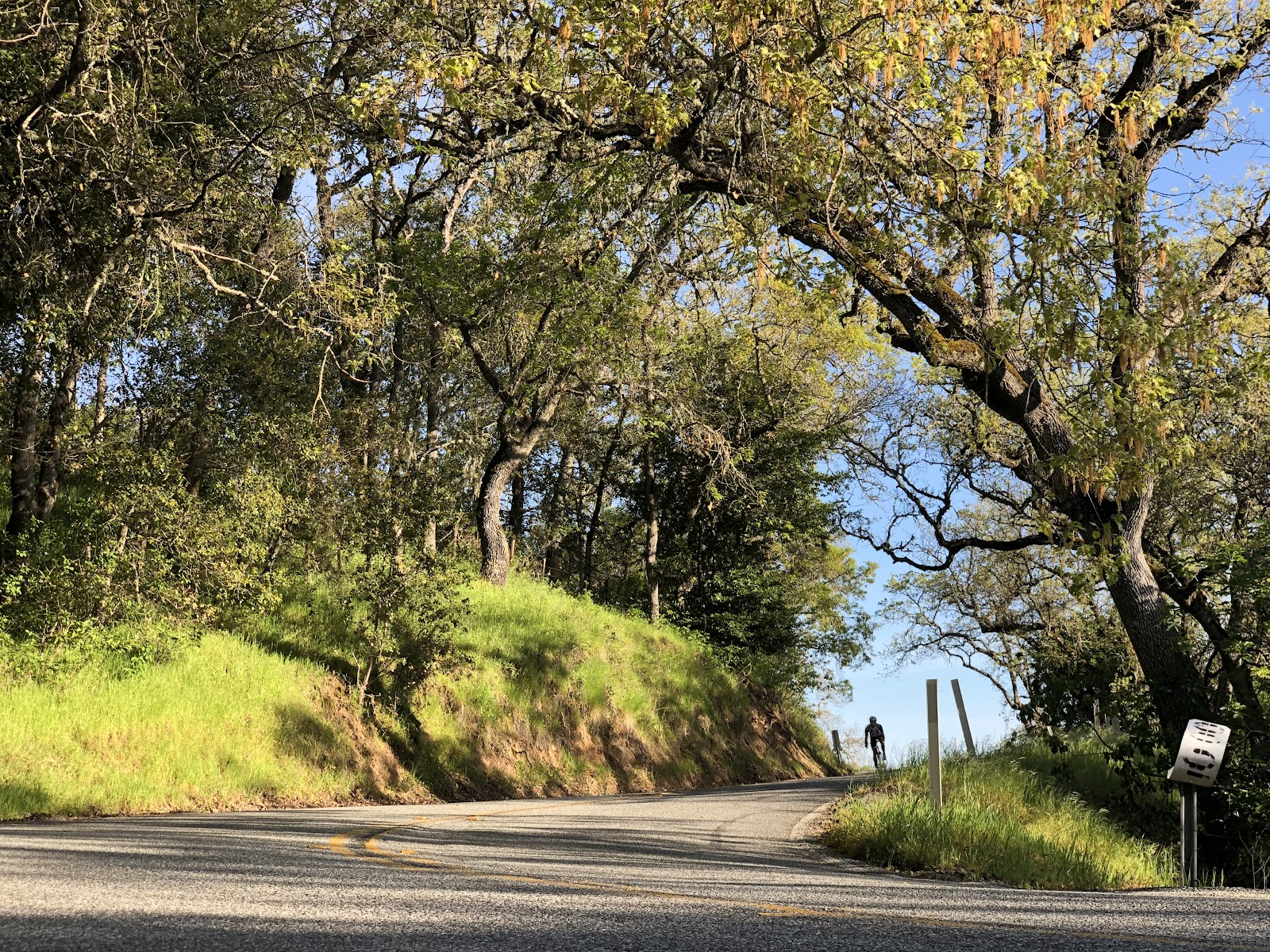 Bicycle ride Mt. Hamilton  - cyclist descending through trees