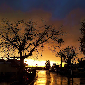 by Tom Carson - City,  Street & Park  Street Scenes ( water, reflection, silhouette, sunset, sunshine, wet )