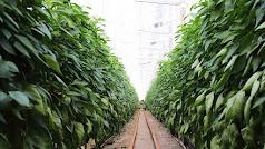 La inflación pone en riesgo la rentabilidad agrícola.