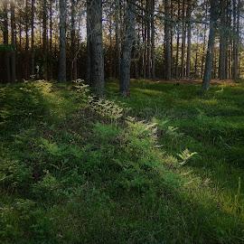 by Denise O'Hern - Landscapes Forests