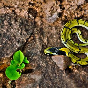 Life on Earth  - Elements Of  Life by Kartik Wat - Animals Reptiles ( balance, snake, life, keelback, herptology, juvenile, reptile )