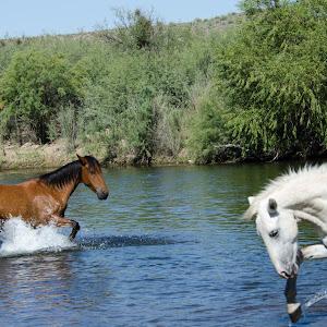 20120929_DJA6205Salt River Horses JPGS.jpg