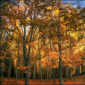 by Jana Vondráčková - Landscapes Forests