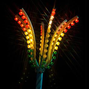 Disco Tree by Goran Kojadinovic - Abstract Fine Art (  )