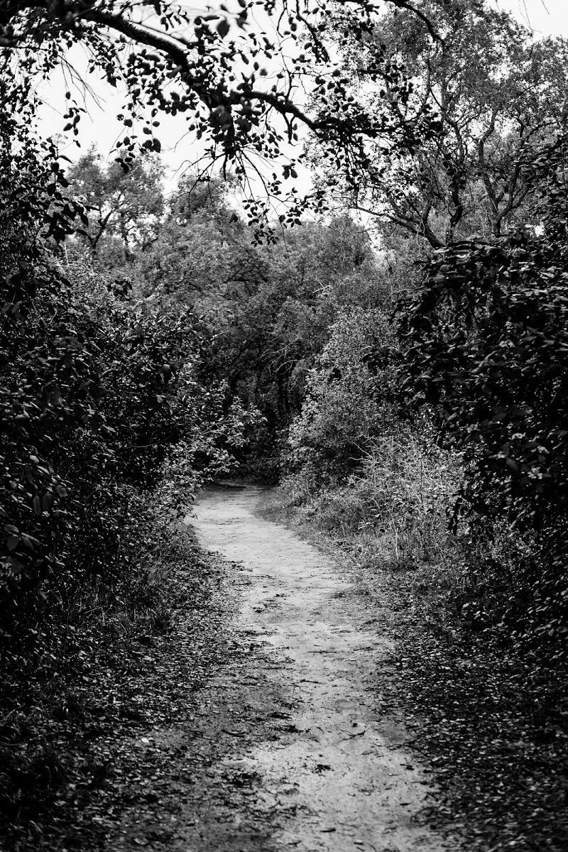 La selva oscura.. di AntonioBar.