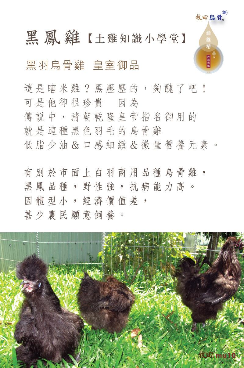 我們使用的『黑鳳雞』有別於市面上一般商用品種烏骨雞。黑鳳品種野性強、抵抗力強,但因體型小產肉率不高,因此很少農民願意飼養。