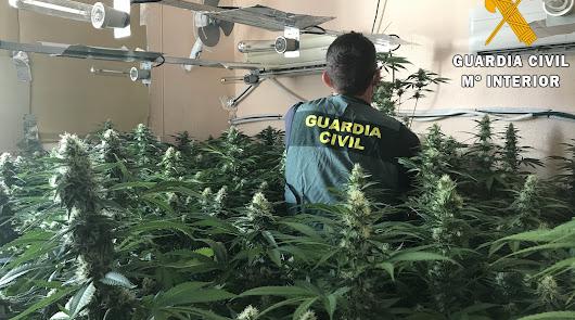 Hallan cientos de plantas de marihuana al lado de un colegio en Roquetas de Mar