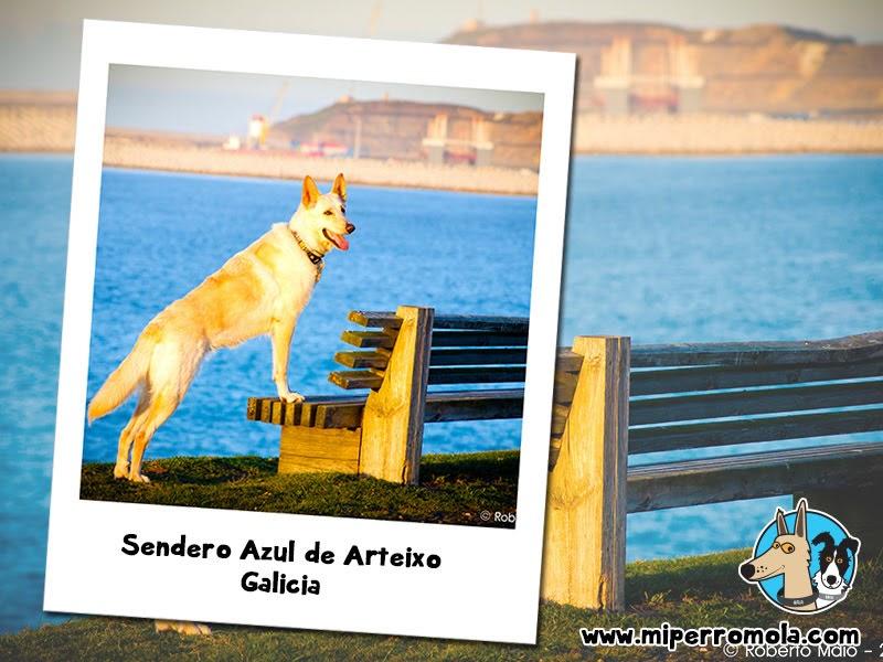 5 Rutas con Perro para Disfrutar del Senderismo Sendero Azul de Arteixo