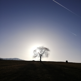 Sunset by Florincas Ciprian - Instagram & Mobile Android ( tree, sun set )