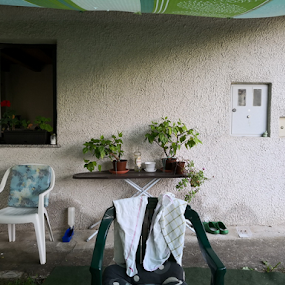 a mixture of everything by Renato Dibelčar - Buildings & Architecture Homes ( chair, plants, window, wall, home, flower )