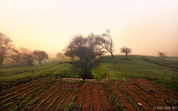 """Photo: Lost Toward Hobbiton  """"Frodo had travelled for so many days, trying to find home but the mists descended to block his way, sometimes little reminders told him the way to go but they deceived his eyes. Too long he had been away, too long had the journey been, too long he had been alone. He needed the comfort of home, of Hobbiton and his family and in their caress, by the warmth of his fire with food in his belly and a place he knew. Time to move on, time to try and find home""""  One of my haunts, when the fog and early morning mists hits this little farm it becomes another world, a place to get lost in your own imagination."""