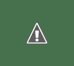 Photo: Purple Heron take off
