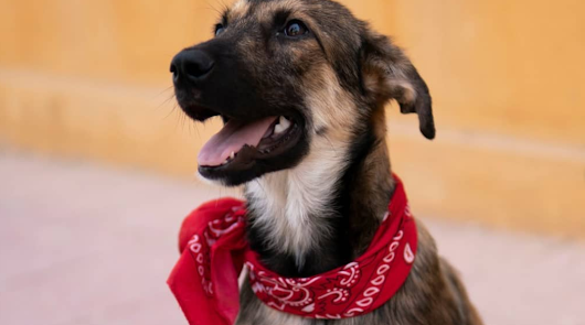 Forocoches rescata a un cachorro abandonado en Almería
