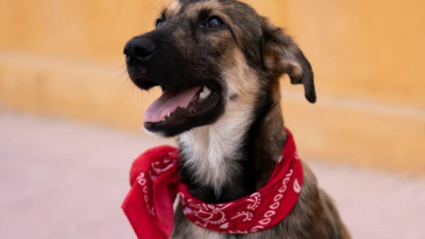 \'Lena\', el cachorro que ha encontrado un hogar gracias a Cinejoven y Forocoches.