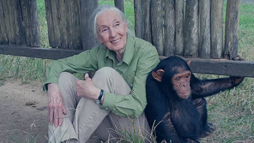 Instituto Jane Goodall