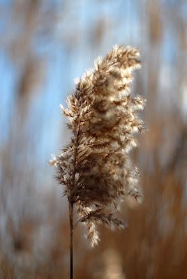 Accarezzata dal vento.. di Mikmata