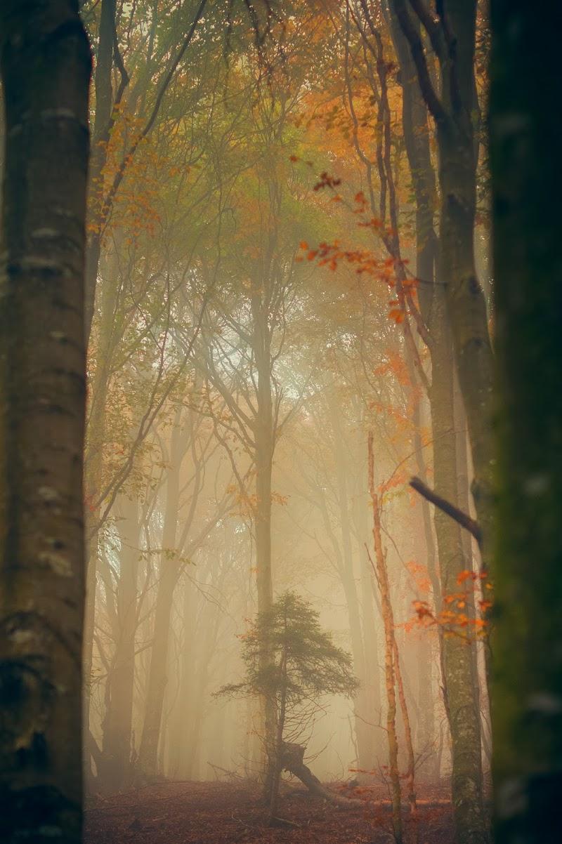 Nebbia autunnale di mariateresatoledo