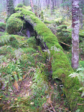 Photo: At least all the rain makes for nice mossy logs.