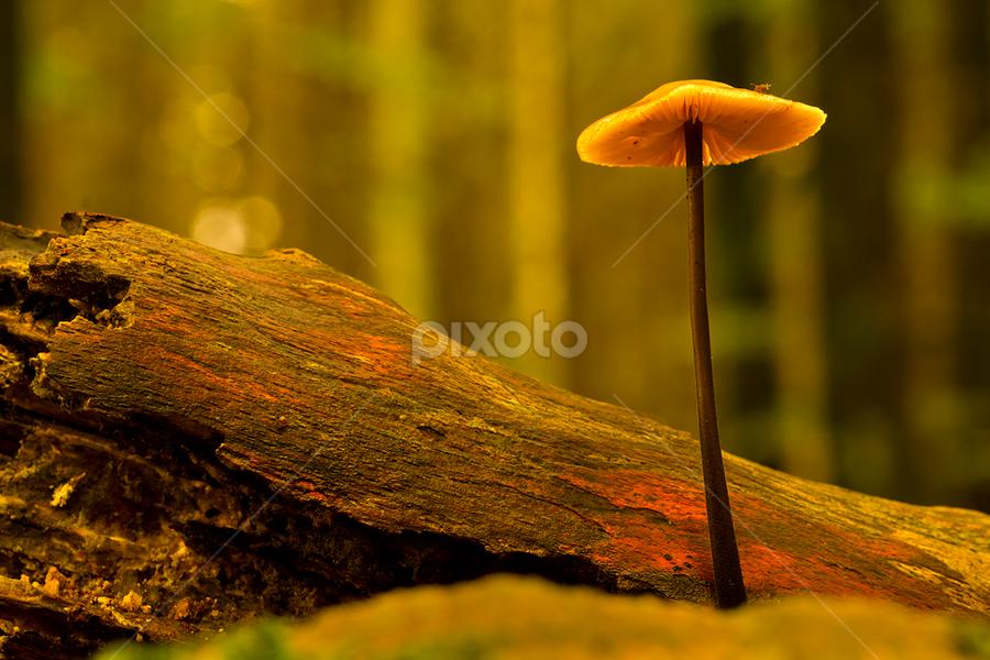 Fungi in the woods by Peter Samuelsson - Nature Up Close Mushrooms & Fungi