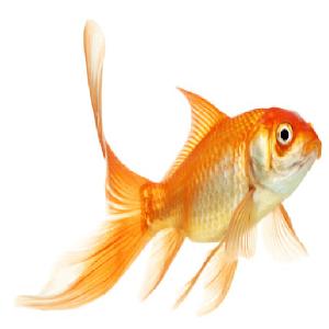 fish live spiel