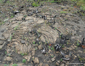 Photo: More puhoehoe from Sugarloaf. Lassen Nat'l Forest.