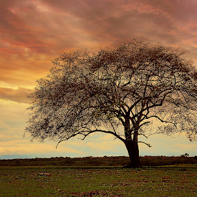 lonely tree by Wahid Hasyim - Landscapes Sunsets & Sunrises ( sunset, landscape photography, landscape, colour sky, lonely tree,  )