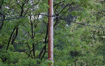 Photo: Day 40 ... At work (break time of course) the dry side of a telephone pole in a rainstorm