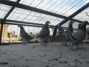 Photo: Hembras del equipo de adultas de vuelo de recreo en el asoleadero.