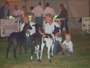 Photo: Rubriek 3: bonte lammeren geboren tussen 1-3 en 20-3 2013.  1a. Kolly vd Oude Schuur; 1b. Kelly vd Oude Schuur; 1c. Lolly vd Oude Schuur.