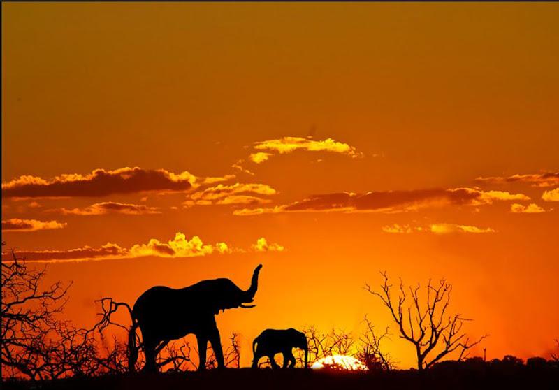 Tramonto Africano  di linobeltrame