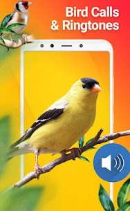 New Birds Ringtones 2020 - Bird sound mp3